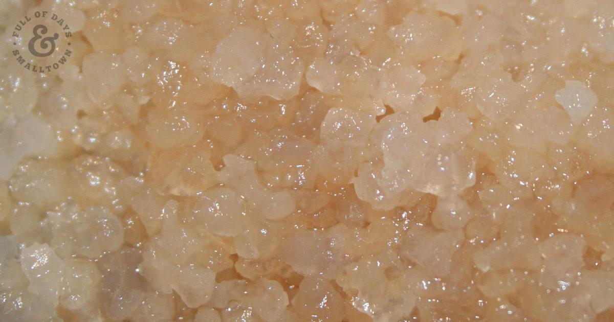 Water Kefir Grains for making homemade water kefir, up close picture.