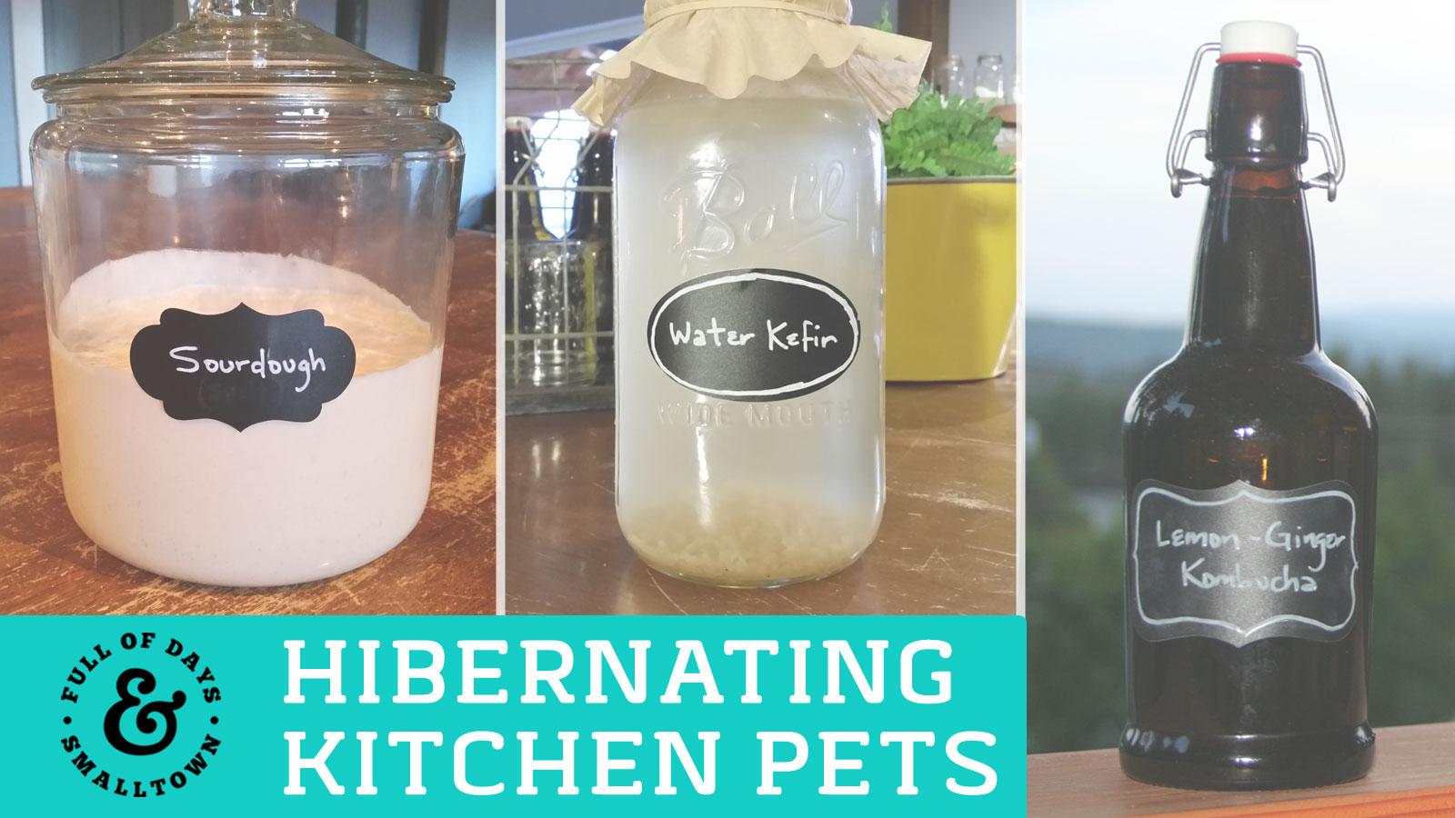 Hibernating-Kitchen-Pets_Full-of-Days_1600-x-900