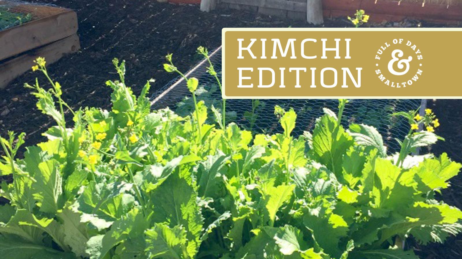 Kimchi-Intro_Full-of-Days_1600-x-900