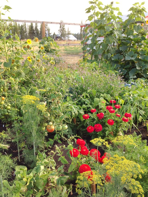 Garden Filled in Rows and Beds