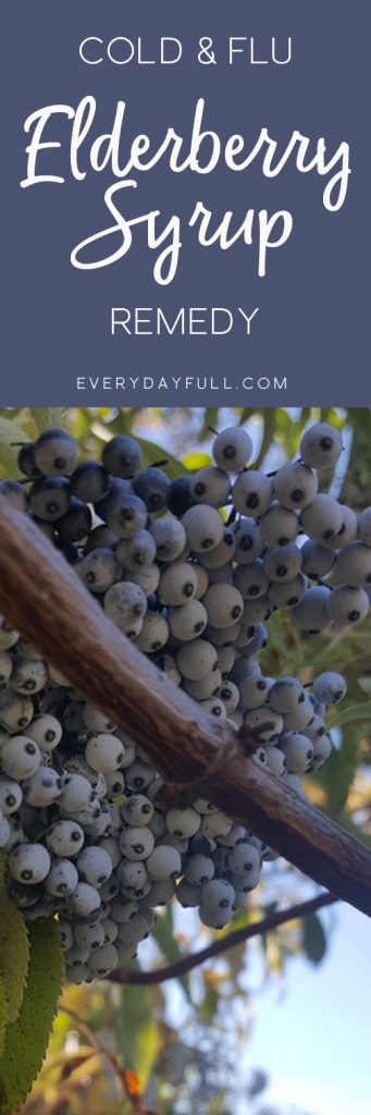 Elderberry Syrup Pinterest Pin