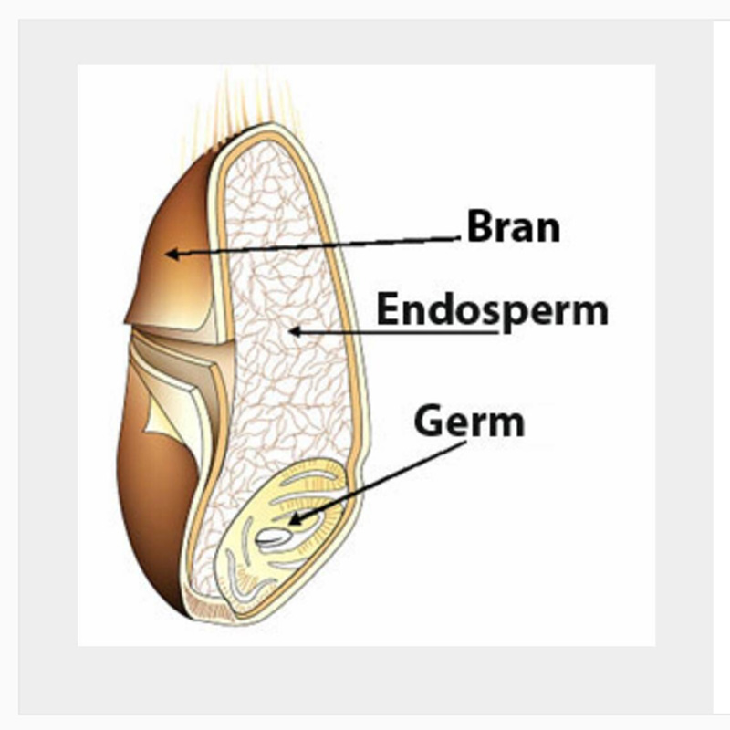 Image of a grain with the three parts labeled: Bran, Endosperm & Germ (Image via BreadBakerty on Instagram)