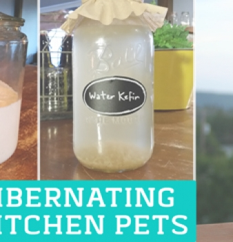 How to Store Ferments While on Vacation
