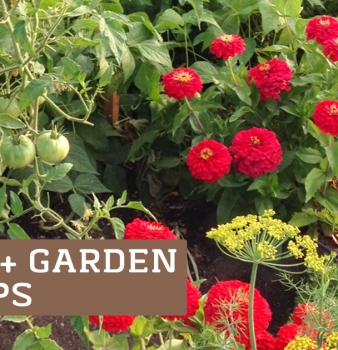 20+ Easy Gardening Tips for a Bountiful Harvest